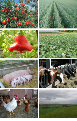 verschiedene Bilder zur Landwirtschaft