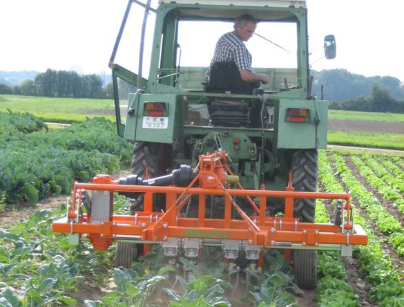 Mechanische Unkrautregulierung im Bio-Feldgemüseanbau