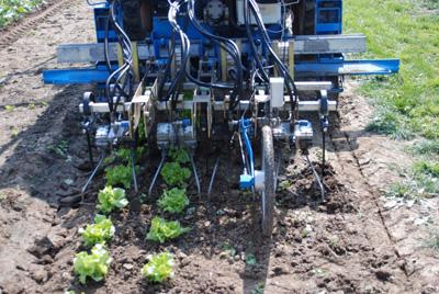 Maschinelle Beikrautregulierung im Gemüseanbau