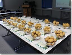 Vielfalt geprüfter ökologischer Kartoffel-Sorten, Knollen übersichtlich mit Sorteneigenschaften in Schalen präsentiert