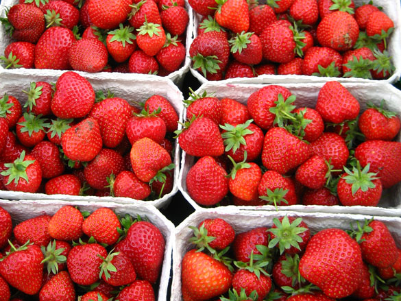 Frühe Erdbeersorte Daroyal, verkaufsfertig in Schalen