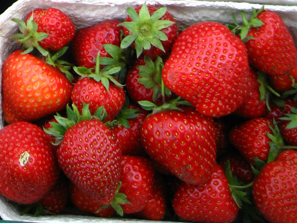 Frühe Erdbeersorte Daroyal in Schale abgepackt
