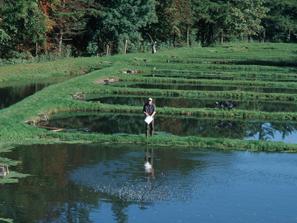 Aquakultur, Blick auf Fischteiche