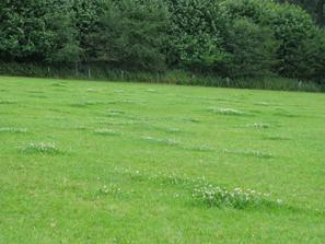Weide mit Geilstellen, Haus Riswick, Foto: LWK NRW