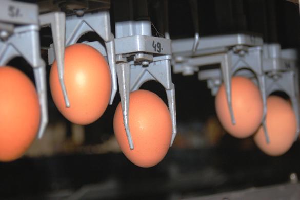 Eier in Greifvorrichtung