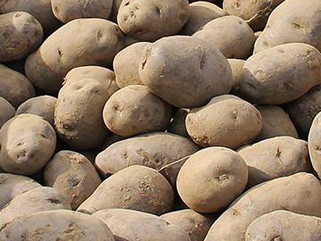 Kartoffeln - Blauer Schwede