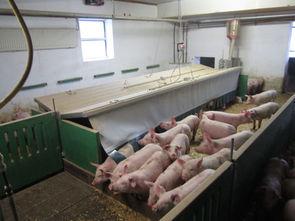 Schweinemaststall mit verschiedenen Klimazonen, Foto: Christian Wucherpfennig, LWK NRW