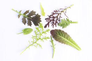 Einzelne Blätter verschiedener Sorten Winterschnittsalate auf hellem Untergrund