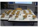 Sortenpräsentation der Öko Kartoffeln