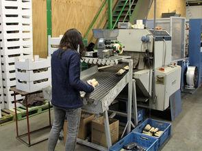 Individuelle Verpackungen für den Lebensmitteleinzelhandel – darauf ist der Betrieb Biotoon spezialisiert, hier werden gerade Petersiliewurzeln in 250 g-Schalen foliert. Foto: Sabine Aldenhoff